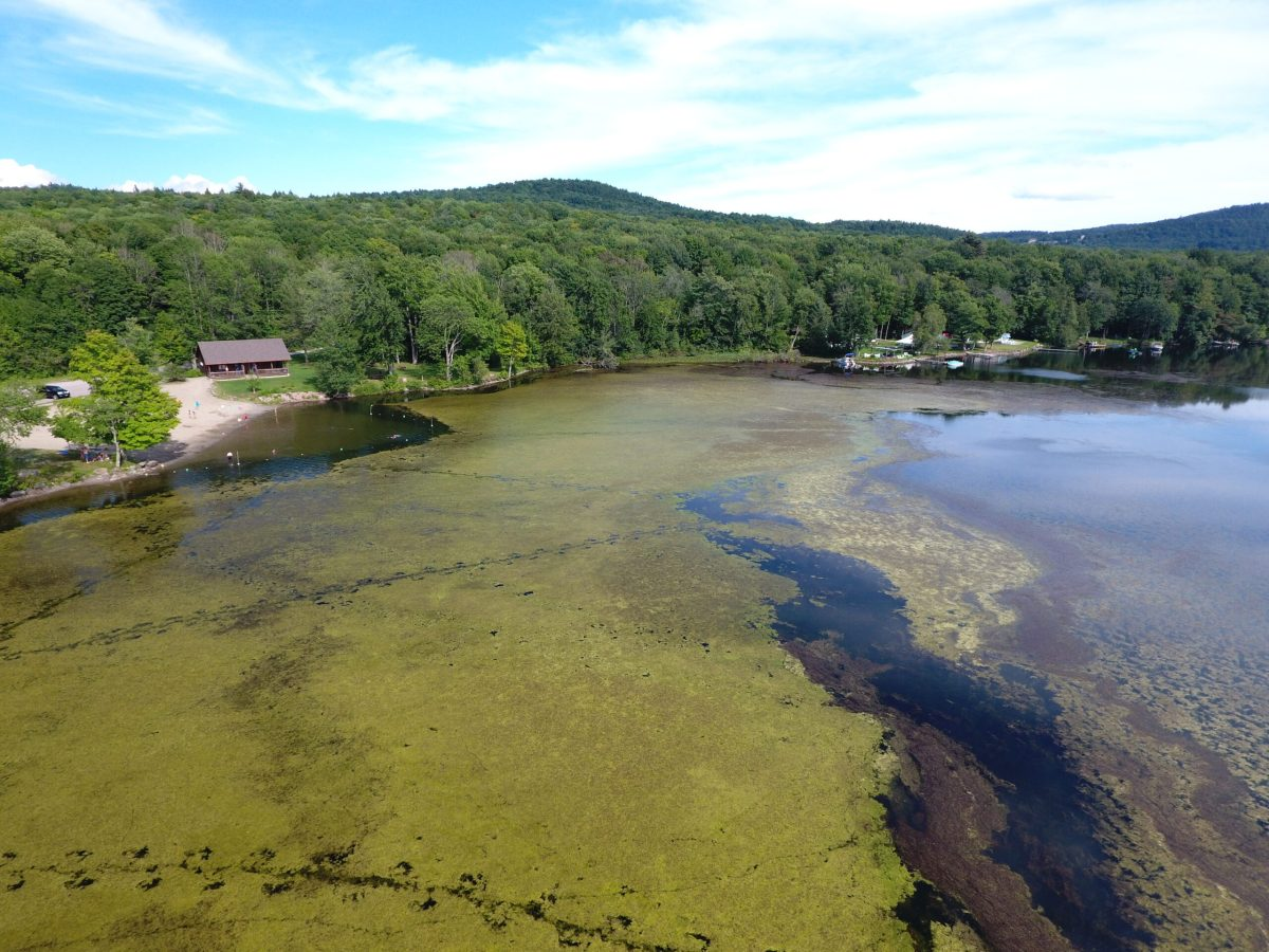 In a Second Permitting Request to Treat Milfoil, Lake Iroquois Received Permission to Use Herbicide