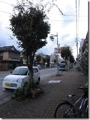 歩道街路樹1