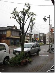歩道街路樹2