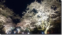 4月12日村松公園夜桜