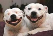 2-smily-dogs