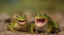 frogs-smiling