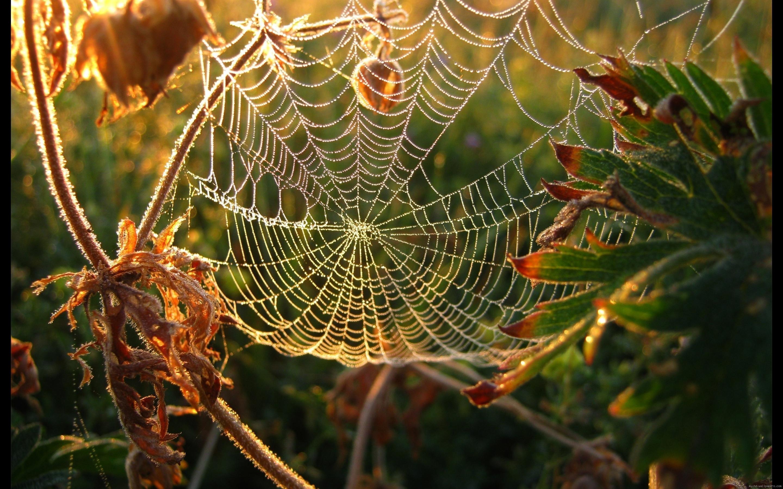 Bing Free Fall Wallpaper Die 81 Besten Herbst Hintergrundbilder Hd