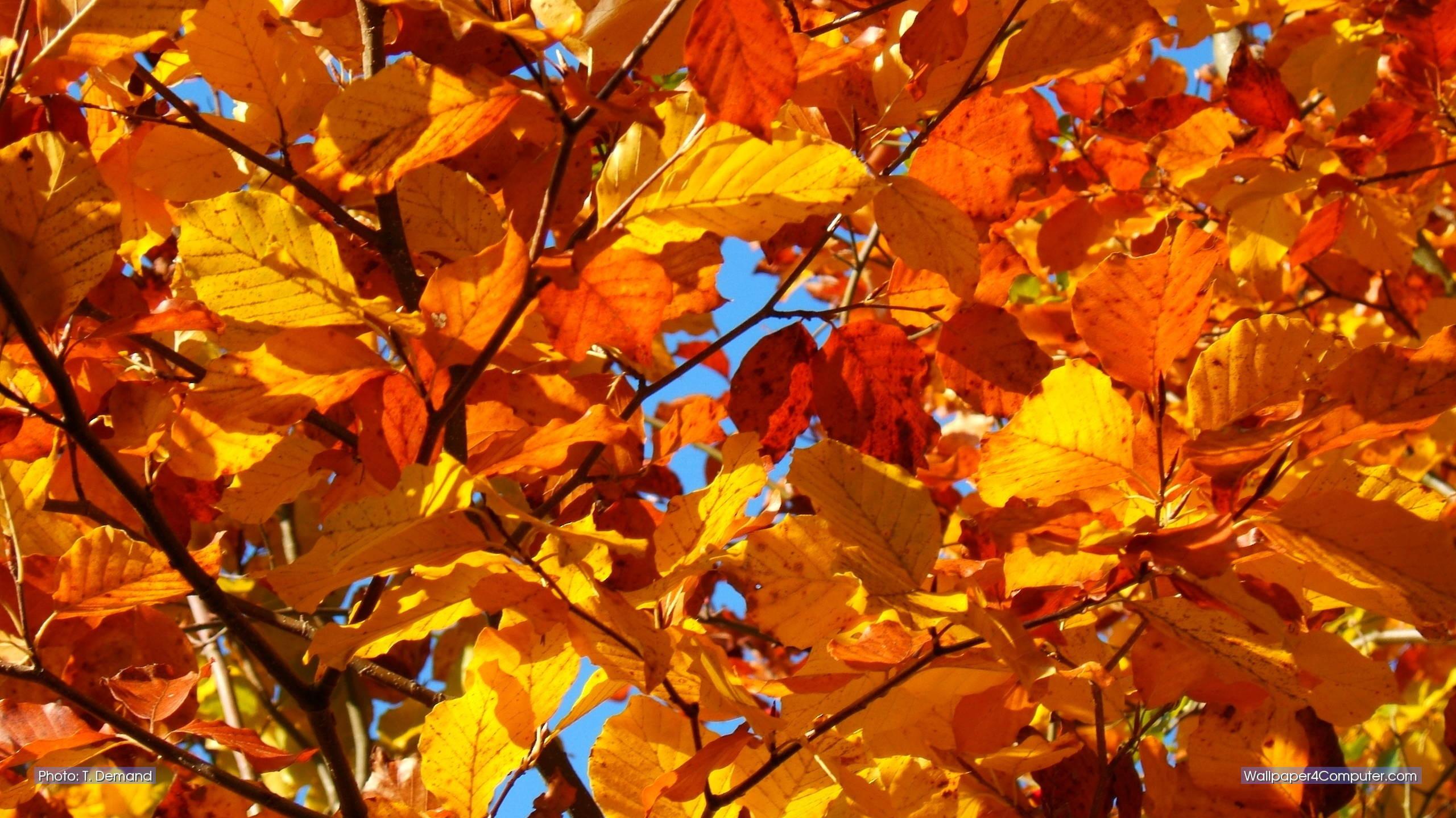 Iphone Wallpaper Fall Leaves Die 78 Besten Herbstwald Hintergrundbilder