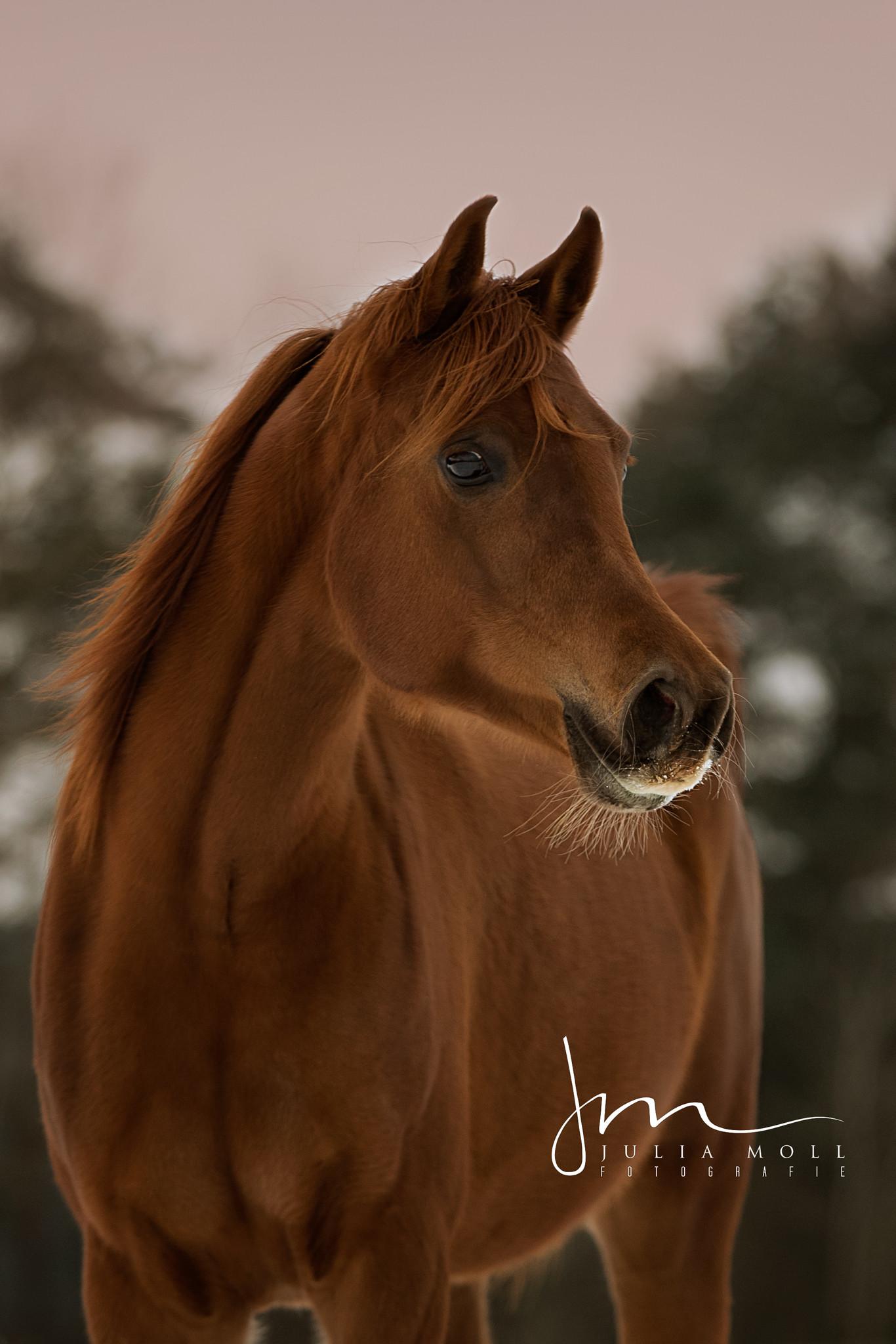 Die 71 Besten Pferde Hintergrundbilder