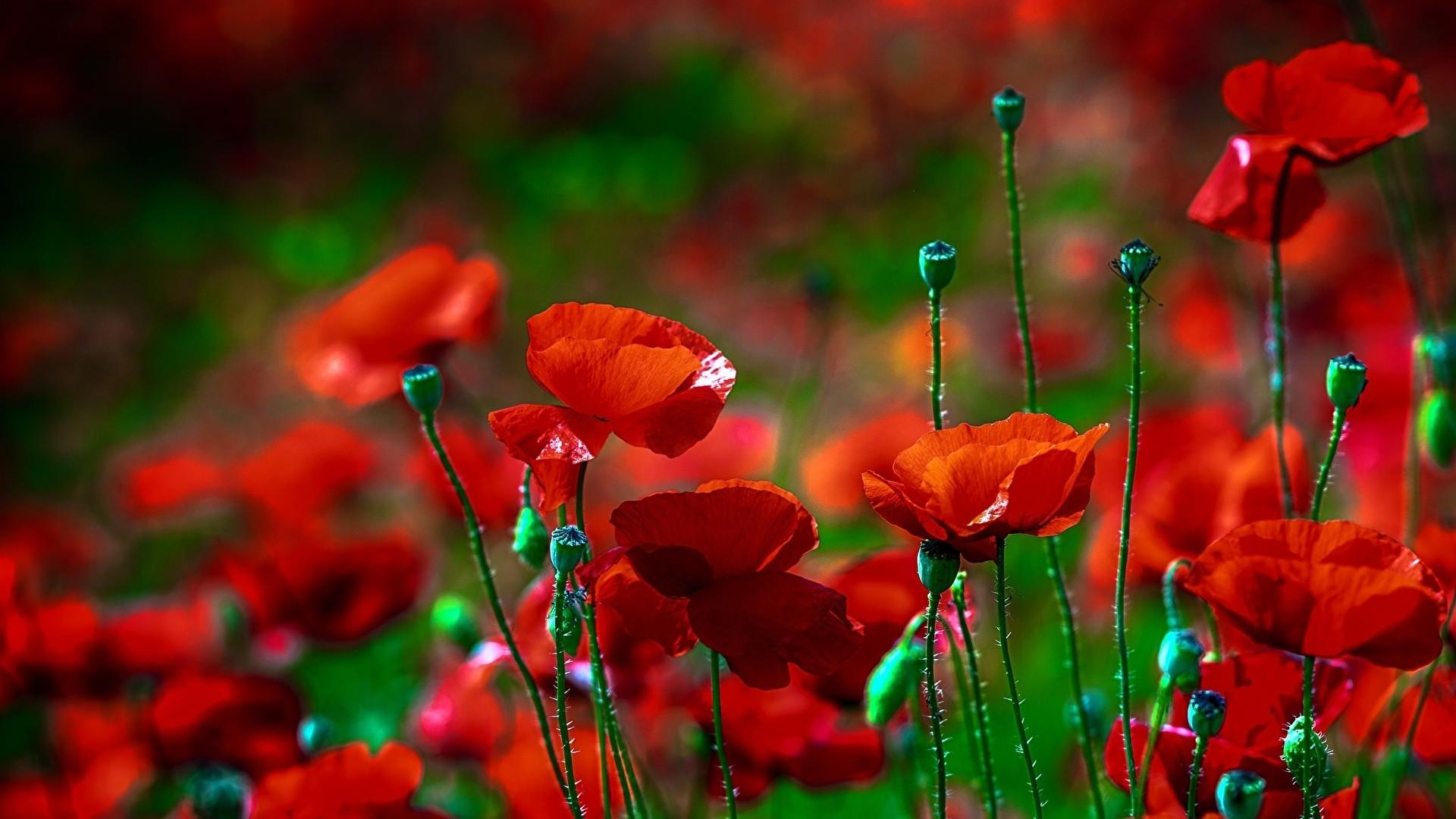 Die 94 Besten Blumen Hintergrundbilder HD 1920x1080
