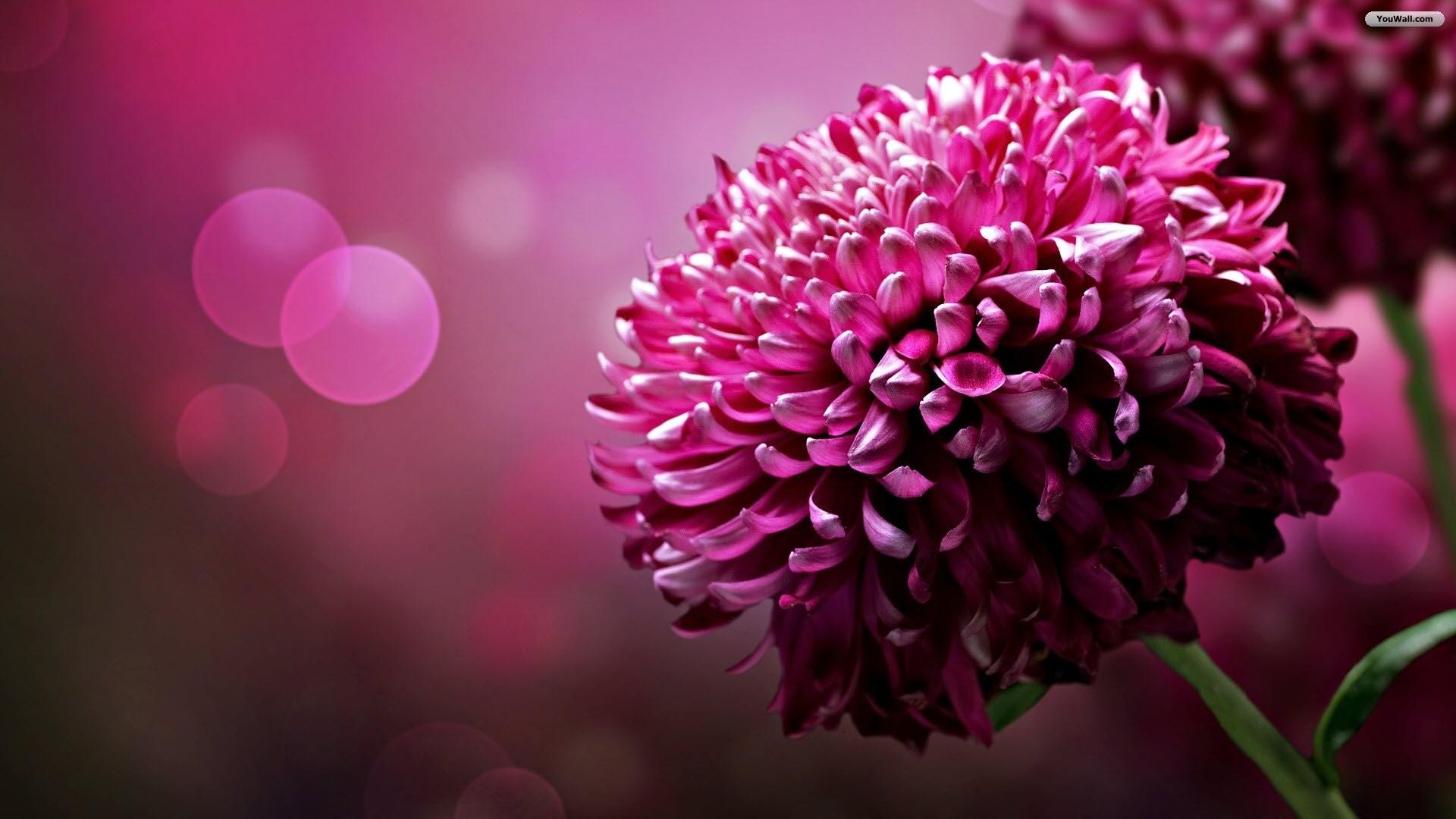 Die 65 Besten Lila Blumen schne Hintergrundbilder