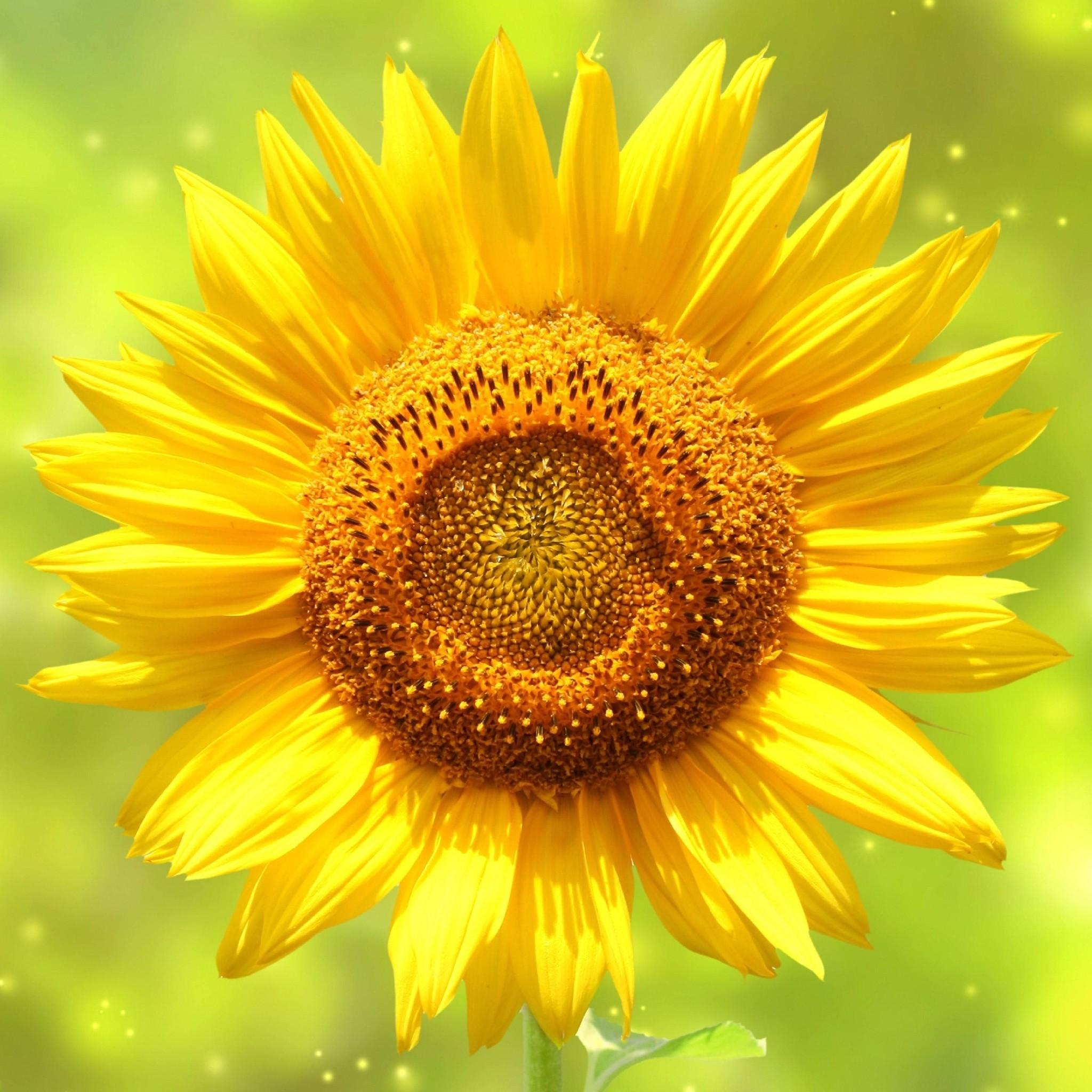 Fall Sunflowers Wallpaper Die 75 Besten Sonne Hintergrundbilder