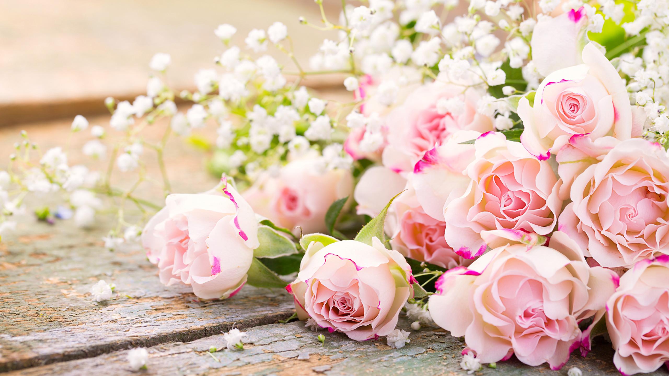 Die 66 Besten Rosen Hintergrundbilder