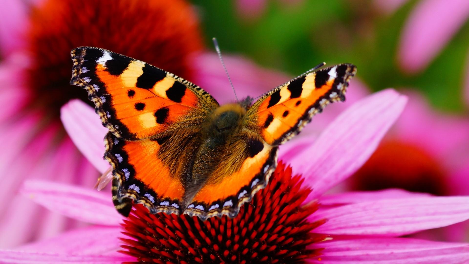 Die 50+ Besten Blumen Und Schmetterlinge Hintergrundbilder