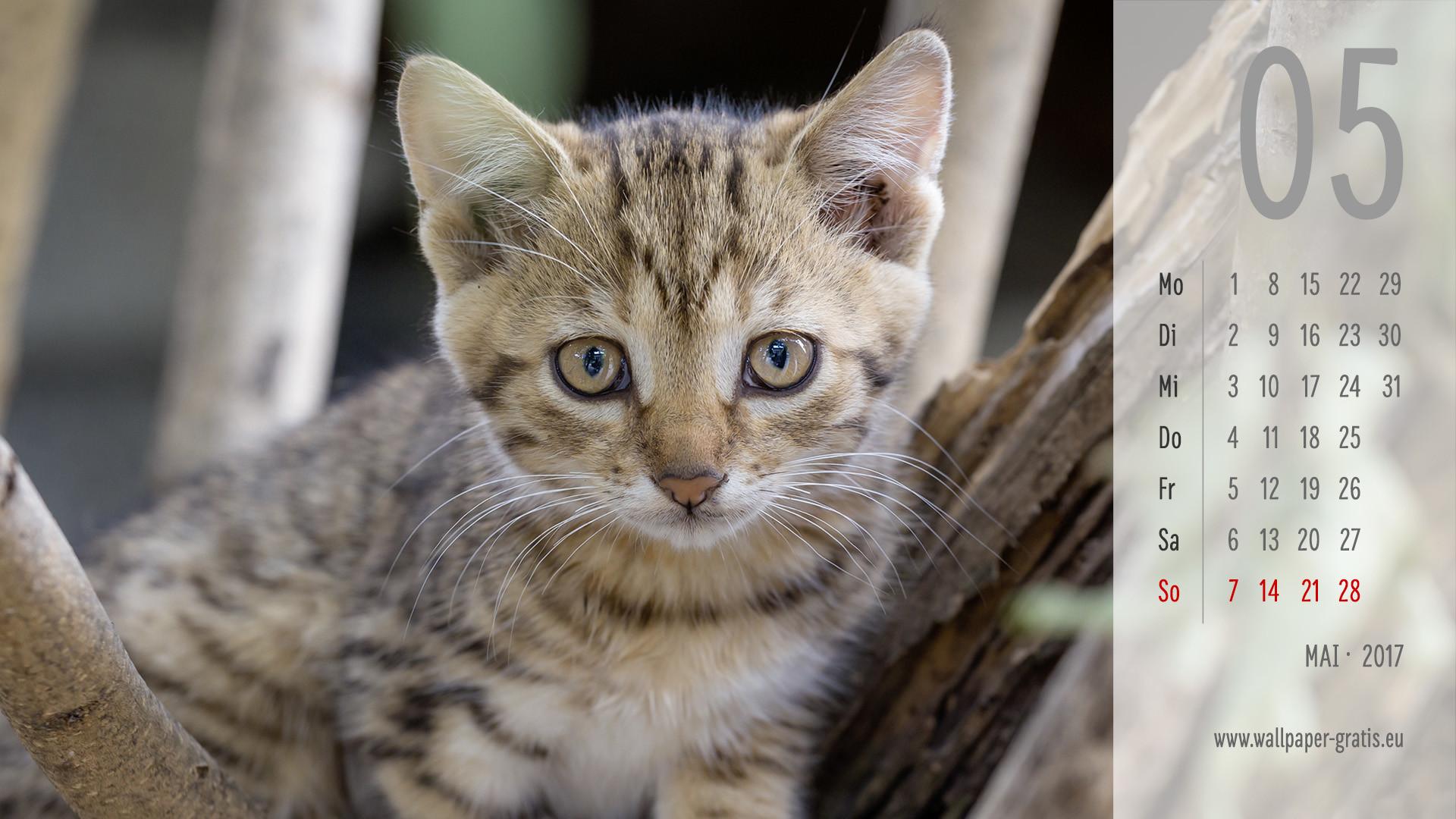 Cute Cat Iphone 6 Wallpaper Die 71 Besten Katzen Hintergrundbilder