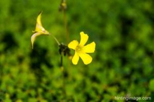 'Yellow flowers'