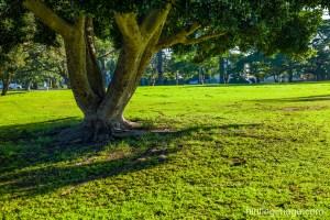 under big tree