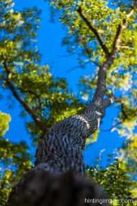Tree Lookup