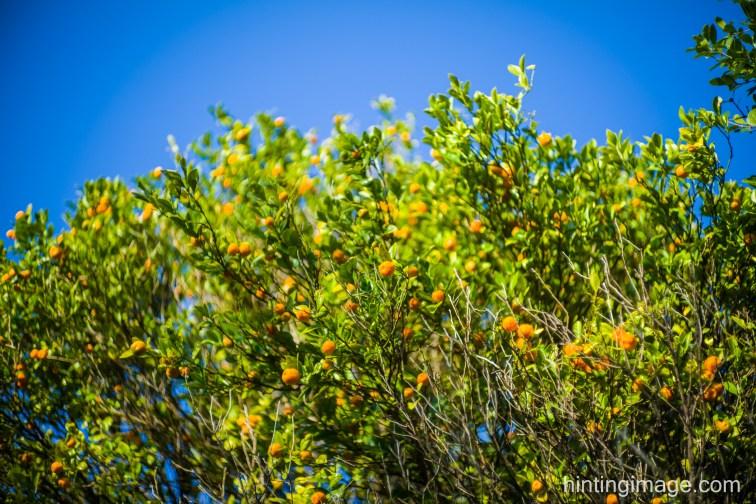 'mandarin'