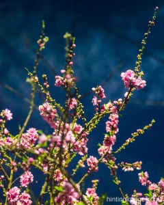 Night Flower 3