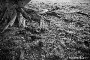 Tree lookdown