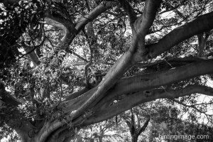 Tree Branches black and white photo