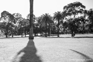Palm Shadow black and white photo