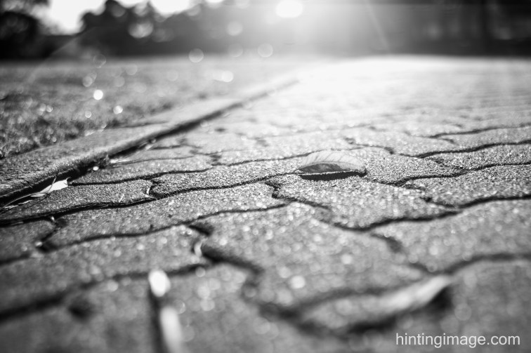 Pavers, Leaf black and white photo