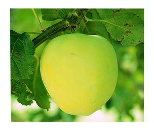 Summer Veggies & June Apples
