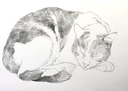 ペン画 猫