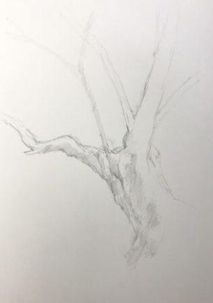樹木デッサン 2