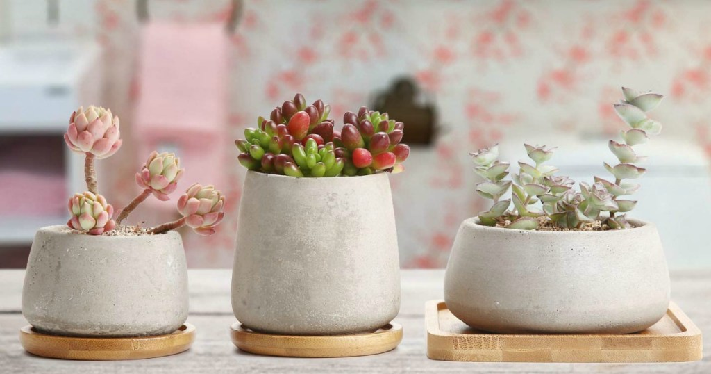 Concrete Cactus Pot Set