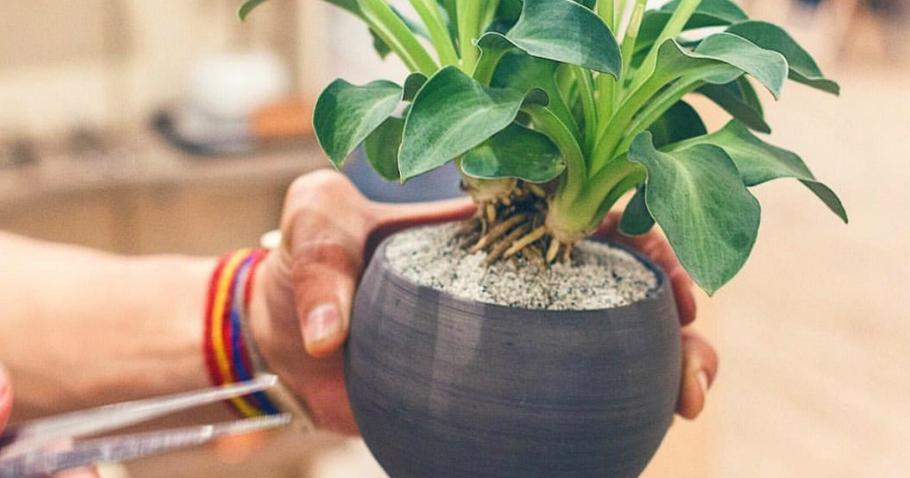 9 Of The Best Places To Buy Your Houseplants Online