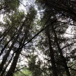 Looking up into the canopy of trees