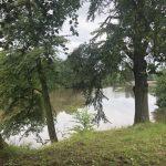 view through trees to lake