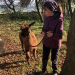Hip2trek leads an alpaca on head halter in a wood