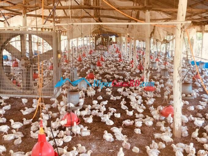 Se vende granja de pollo con dos naves en Monte Plata