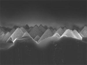 celulas-piramide