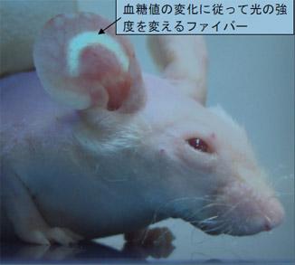 Ratón con sensor activado