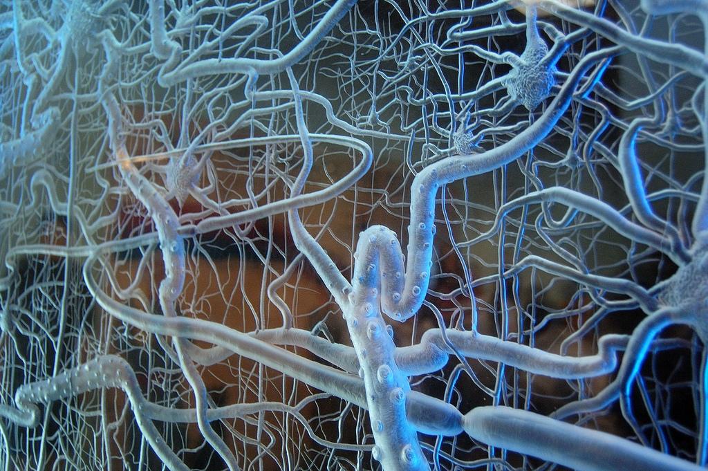neural-network-model
