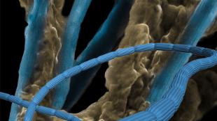 Bacterias conductoras de energía