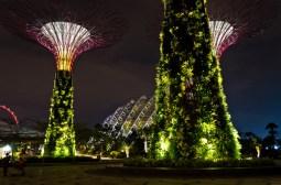 Singapur superárboles 7