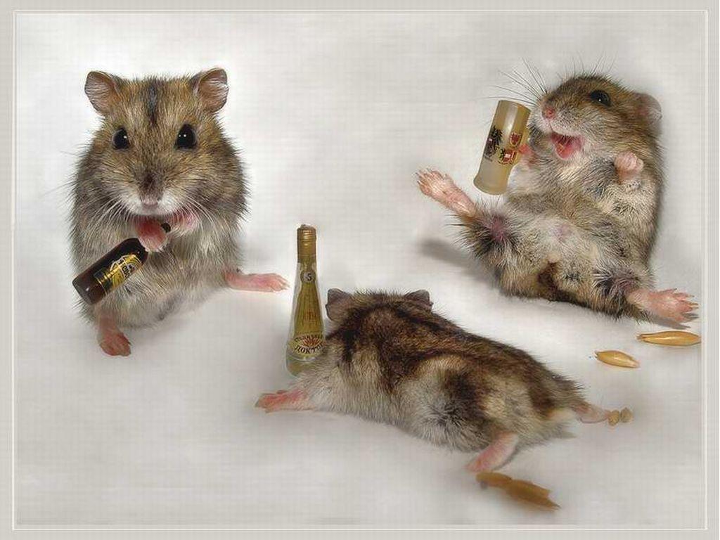 Desarrollan nanocápsulas que eliminan el alcohol en la sangre