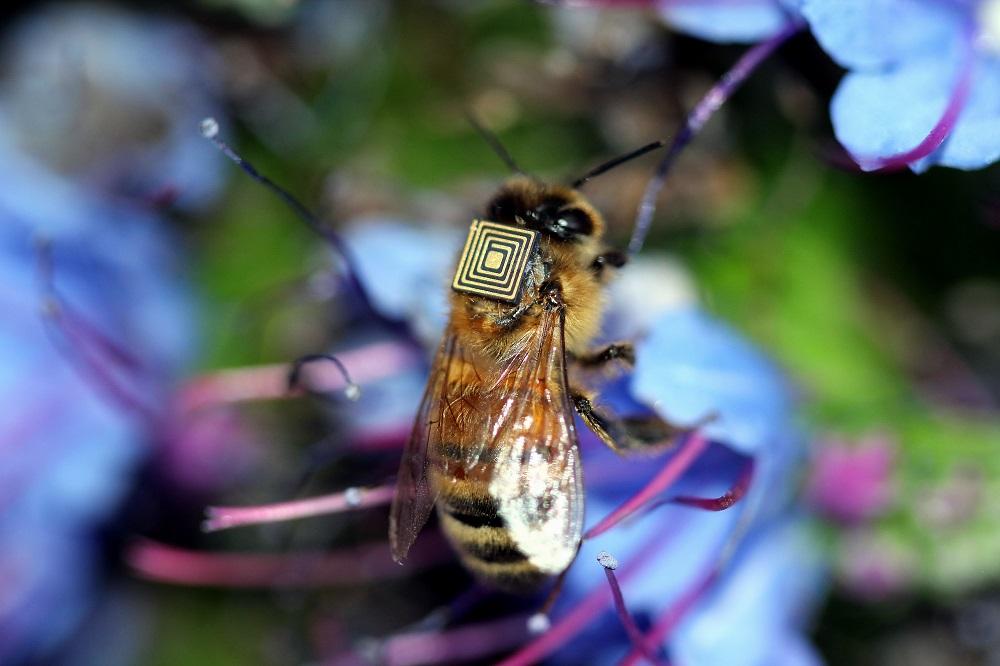 abejas con sensores