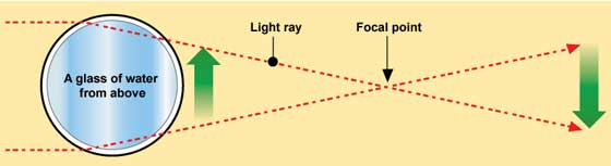 punto-focal