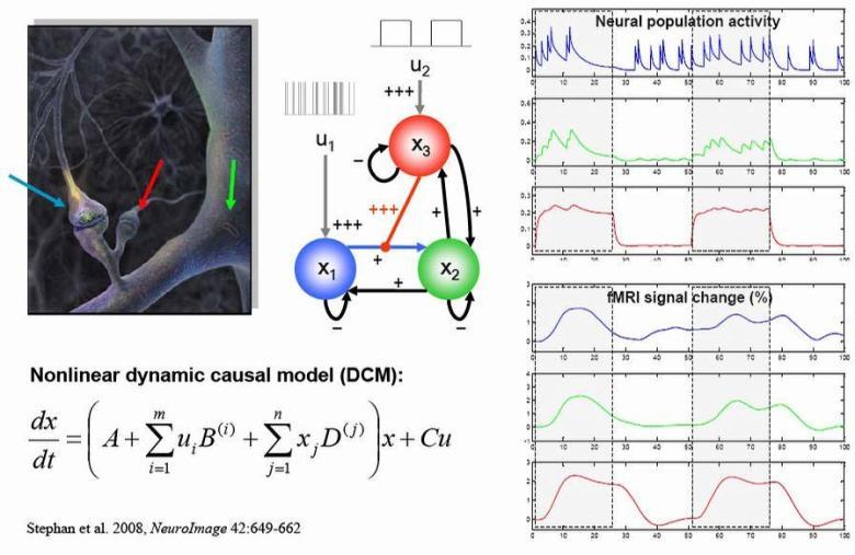 neuromodelización