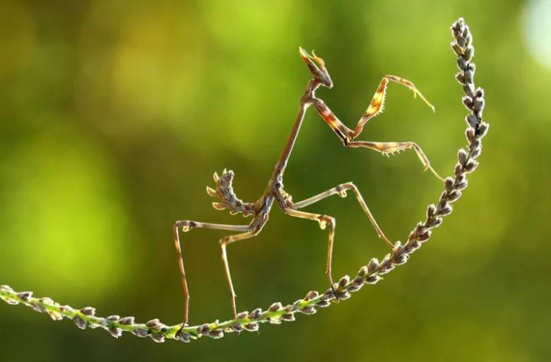 Mantis en Turquía. Foto de Mehmey Karaca. National Geographic Photo Contest