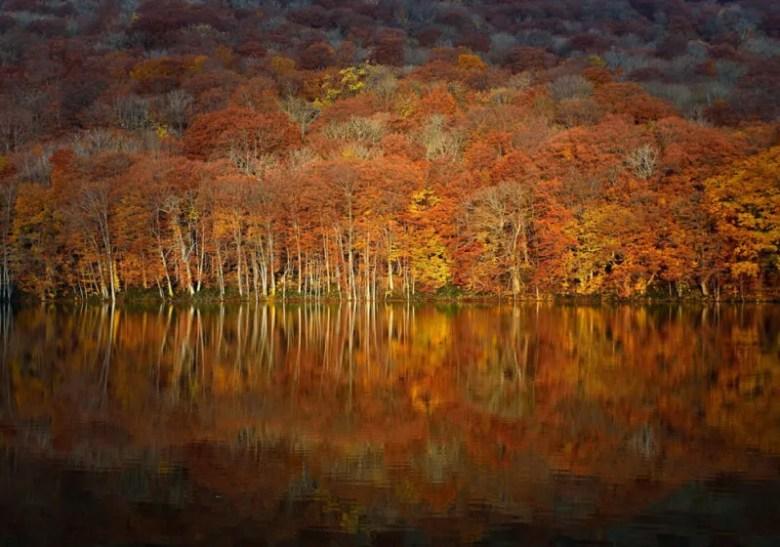 Pantano en Aomori, Japón. Foto de Sho Shibata. National Geographic Photo Contest