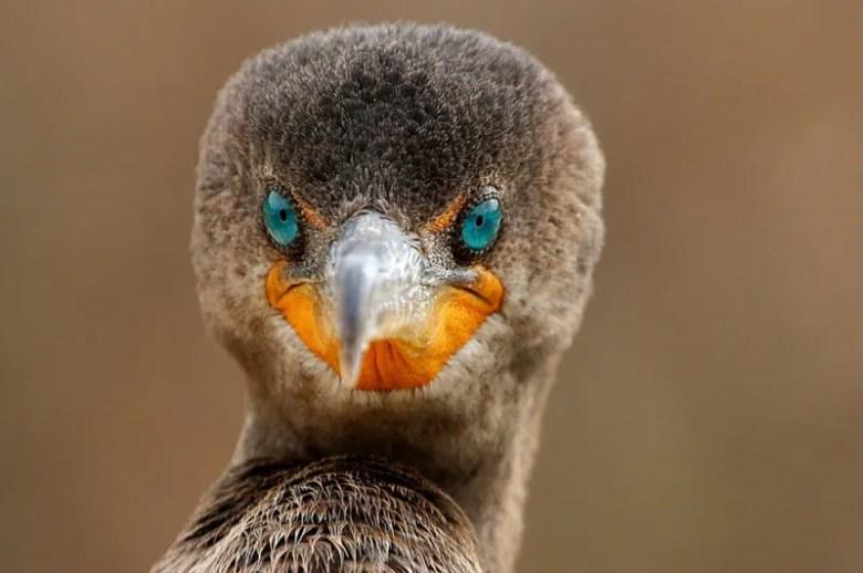 Foto de Sandy Scott. National Geographic Photo Contest