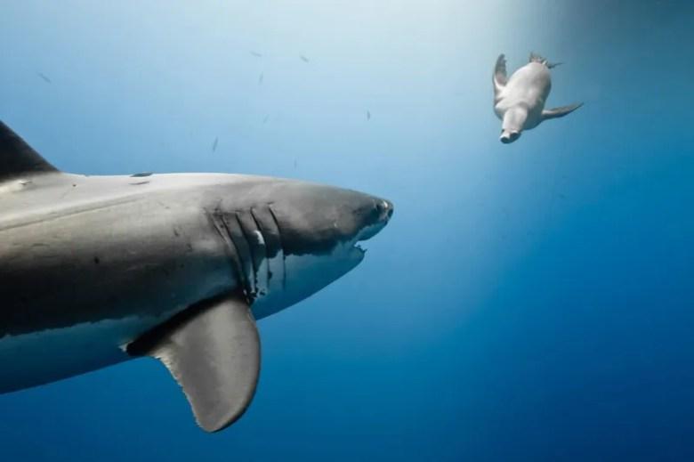 Depredador y presa. Foto de Marc Henauer. National Geographic Photo Contest