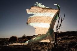 Plastic Trees, de Eduardo Leal (WPO)