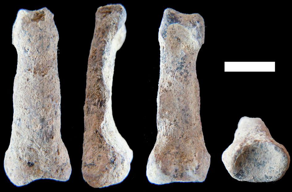 hueso más antiguo