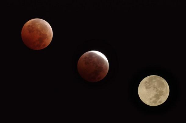 Diferentes fases de un eclipse lunar. Créditos: Angel DiBilio | Shutterstock