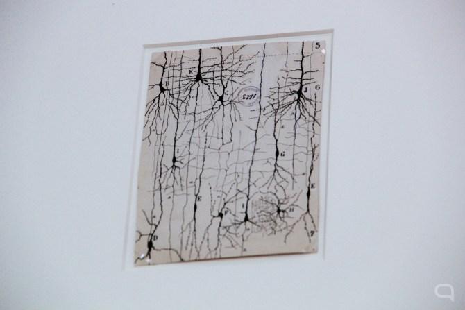 legado de Cajal